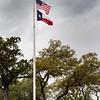 Bluebonnet Flags