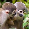 Monkey Friends