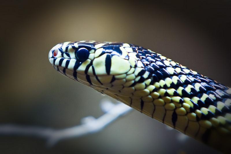 Miami Metro Zoo snake