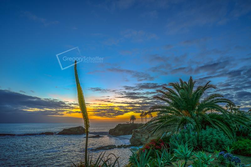 """A """"Blue Hour"""" walk in Treasure Island Park, Laguna Beach, CA"""