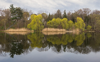 Springtime Reflections