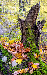 Mossy Leaves