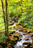 Mountain Stream Oil Painting