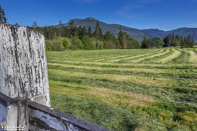 Field of Fresh Cut Hay