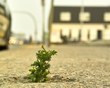 Persistence. Bloom Where You're Planted