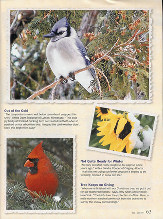 """<div class=""""jaDesc""""> <h4>Birds & Blooms Reader's Scrapbook - December 2006 </h4> <p>Two of my photos (Blue Jay in Hemlock & Northern Cardinal in Spruce Tree) were featured in the December 2006 edition of Birds & Blooms magazine - page 63.</p> </div>"""
