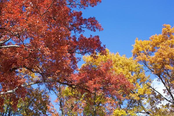 Bloom of Autumn