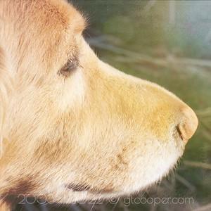 Dog's Wonder
