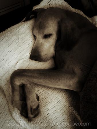 Red Dog Slumber