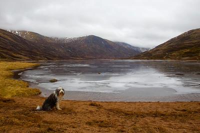 Buddy at Loch Callater Aberdeenshire.