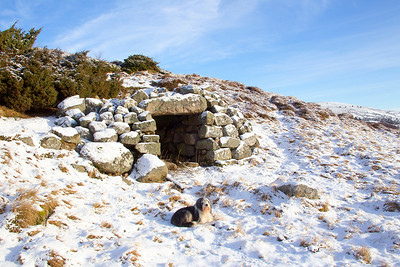 Buddy takes a rest at the Old Stone Oven in the Gairn near Balloter.