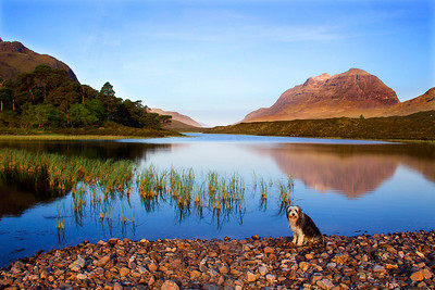 Buddy at a Lochan near Kinlochewe. The Mountain of Liathach on the RHS.