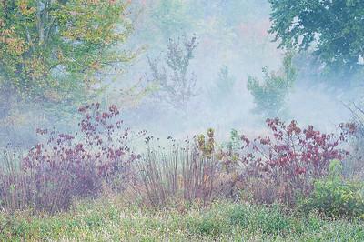 Tuckahoe Meadow