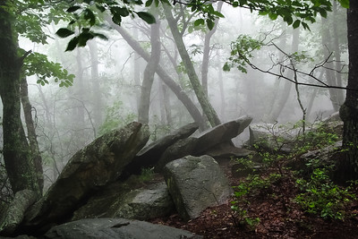 Forest Fog & Rocks