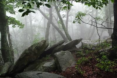 Forest Fog & Rocks