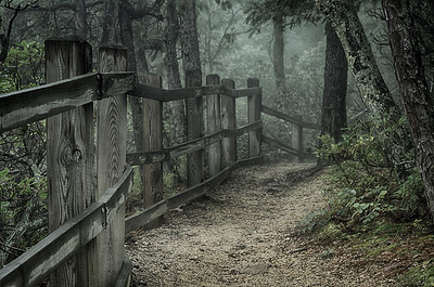 Sassafras Trail, Pilot Mountain