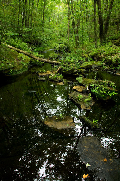Wolf Creek in Banning State Park