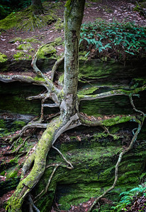 Mossy Outcrop