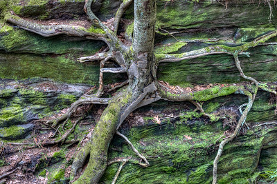 Mossy Outcrop 3