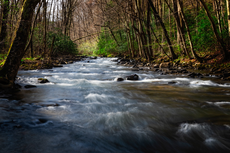 Catch & Release Fly Fishing Stream