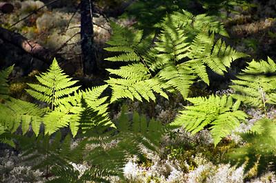 Acadia National Park | Mount Desert Island, Maine | US - 0148