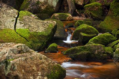 Acadia National Park | Mount Desert Island, Maine | US - 0102