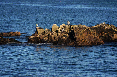 Acadia National Park | Mount Desert Island, Maine | US - 0144