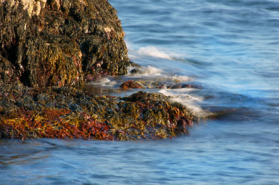 Acadia National Park | Mount Desert Island, Maine | US - 0138