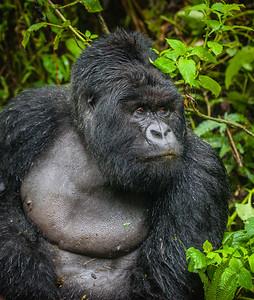Africa 2017-253