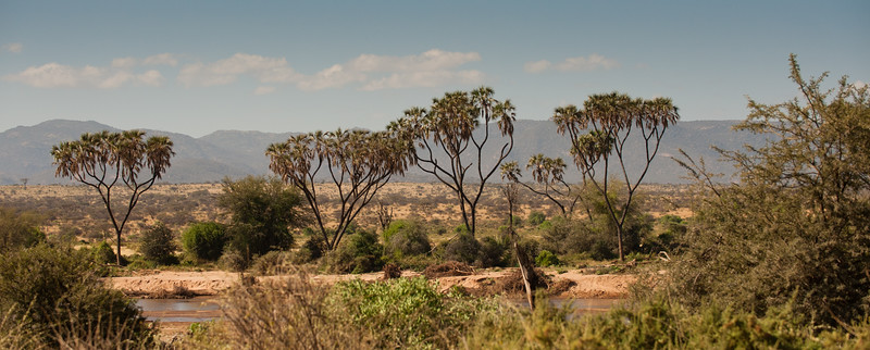 African land