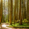 Icy Strait Nature Trail