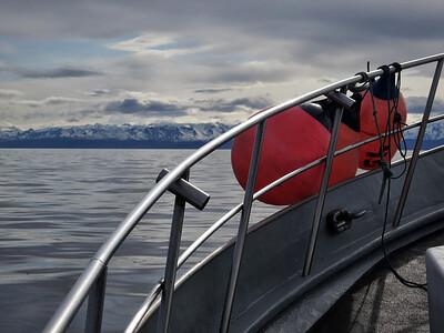 Halibut Charter | Kachemak Bay | Homer, Alaska
