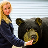 Juneau - This poor bear's paws were clamped to the ground and he had an itch that needed to be scratched. Charlene, like Dr. Dolittle, took no time to figure that out.