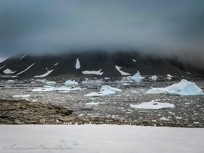 Antarctic-17