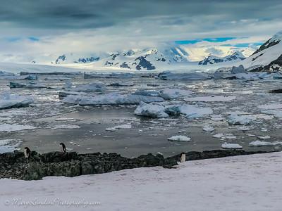 Antarctic-26
