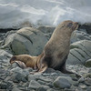 Sunbathing Seal 2389