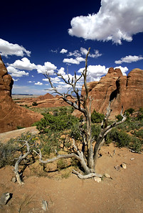 Arches National Park | Utah | US - 0008