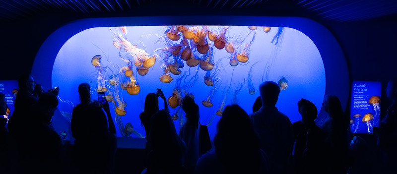Jelly Fish Inside The Aquarium