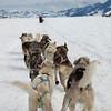 Sled Dogs, Juneau, Alaska