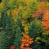 Forest in autumn colours. Cape Breton Island, Nova Scotia