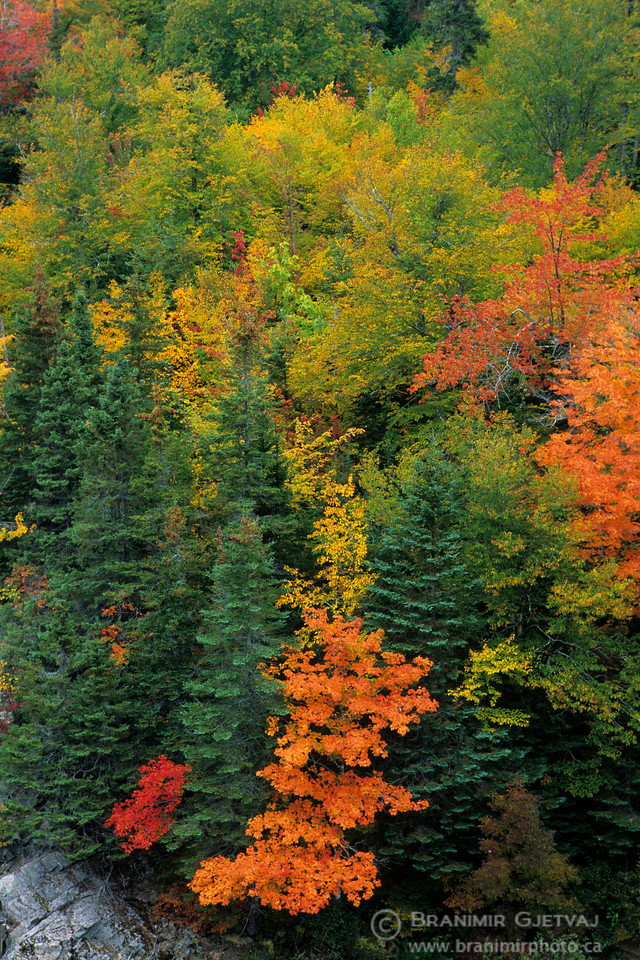 Forest in autumn colours. Cape Breton Island, Nova Scotia