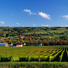 Gaspereau Valley vineyard in autumn, Nova Scotia