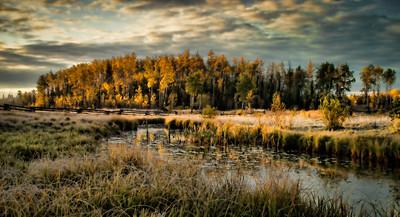 A Cariboo Fall