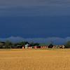 Wheat field and farm buildings near Saskatoon, Saskatchewan