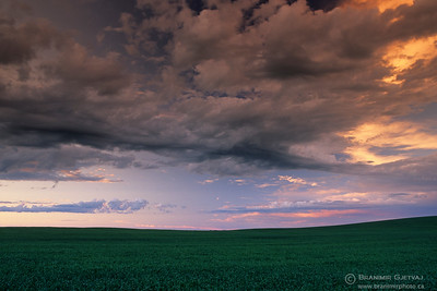 Wheat field and clouds at sunset, Saskatchewan