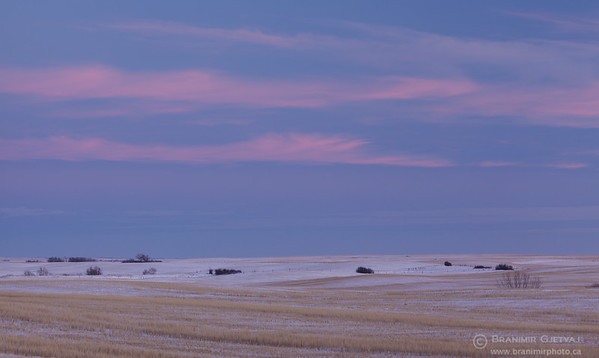 Snow-covered farm fields at dusk, Swift Current