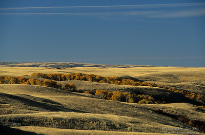Prairie with aspen trees in autumn. Cypress Hills, Saskatchewan