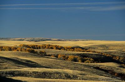 Prairie with aspen trees in autumn. Cypress Hills, Saskatchewan