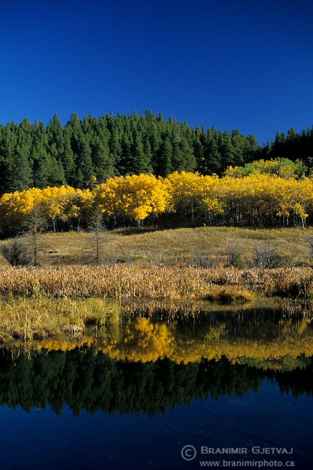Aspen trees by a lake in autumn, Cypress Hills, Saskatchewan