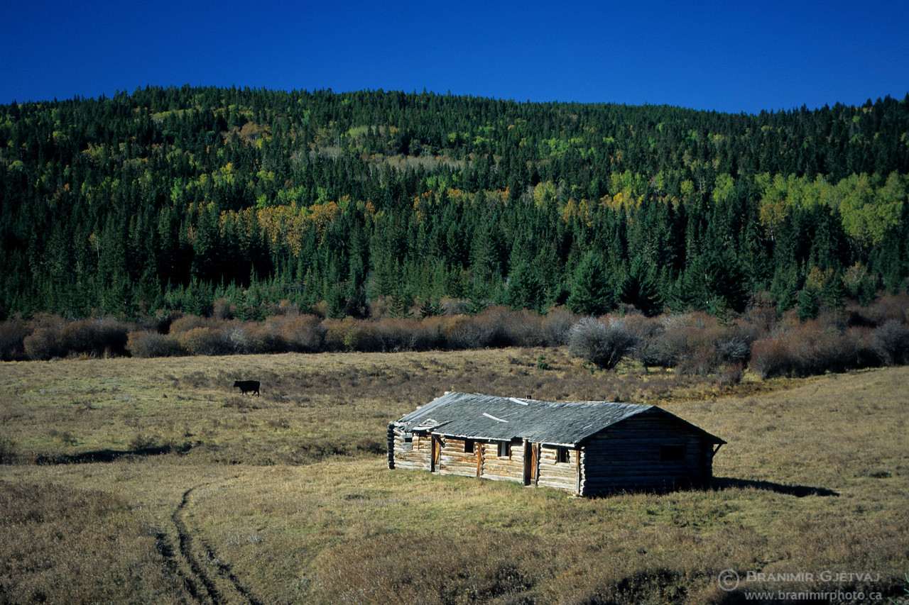 Abandoned log cabin homestead, Cypress Hills